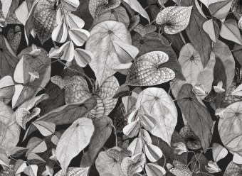 Christian-Fischbacher-Tapete-Botanica
